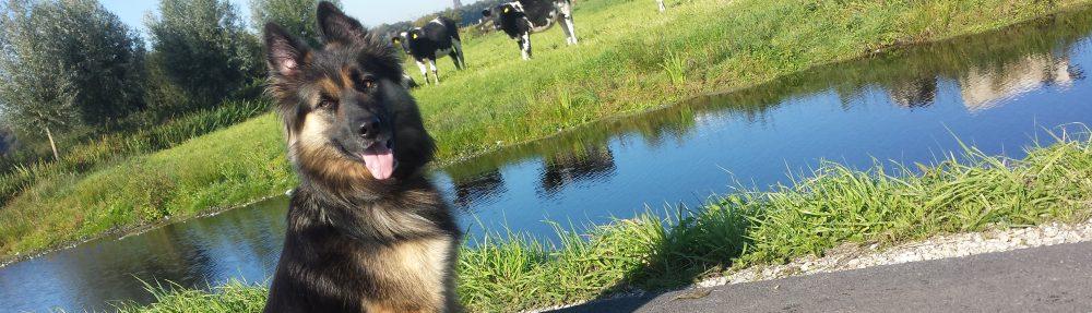 Anoeska's Heart 4 Dogs