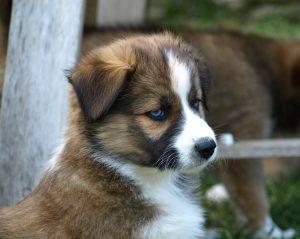puppy-374976_960_720