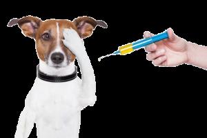 vaccinatie-hond-vrij-300x200